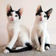 Katzengeschwister Elina und Sweety suchen