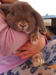 kaninchen mit Zubehör