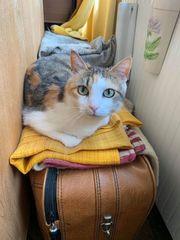 Cleo Katze aus dem Tierschutz
