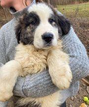Nergal sucht Hunde erfahrene Menschen