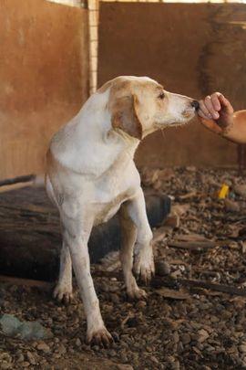 MELLY - Sie ist zu einer: Kleinanzeigen aus Overath - Rubrik Hunde