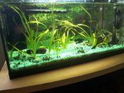 ich verkaufe ein Komplettes Aquarium