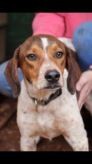 Welpe Hund Finley 6 Monate