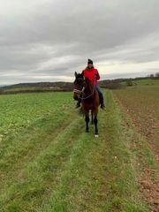 Dienstleistungen für Pferdepensionen Einsteller Tierhalter