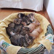 4 Kätzchen abzugeben Kinderfreundlich und
