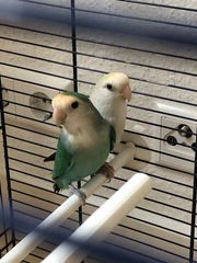 2 x Vögel inkl großer