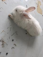 Kaninchen entgelaufen am 29 04