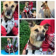 Hund Rüde Spiros 5 Jahre