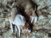Sonderangebot Schöne Schaffelle für Haustiere