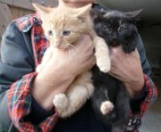 Junge Freigänger-Kätzchen zu verschenken