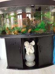 Aquarium mit Besetzung