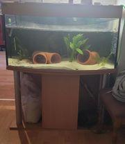 Aquarium ohne zubhör