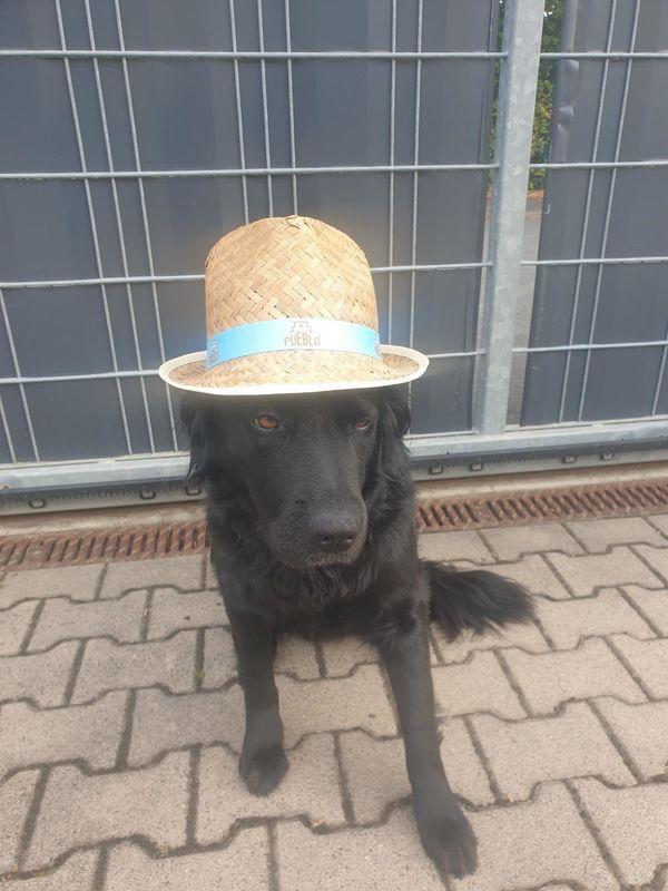 Hunde Freunde Gassi gehen Bekanntschaft