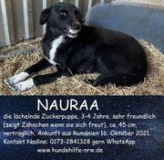 Lachende Nauraa
