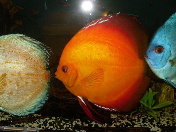 Aquarium inkl Fische und Zubehör