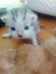 Babykatzen Sooo suess von unserer