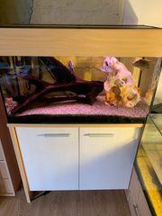 Aquarium 100l mit Unterschrank und
