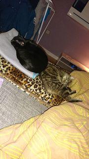 Kater und Katze abzugeben