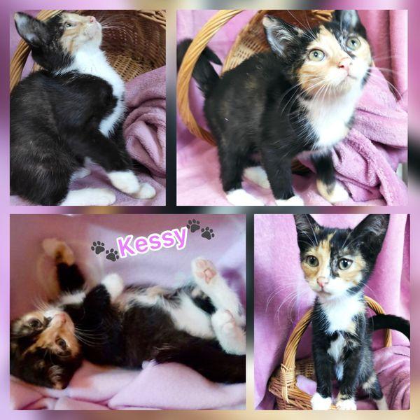 Tricolor dreifarbige Baby Katze Kitten