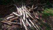 Biete kostenloses Brennholz