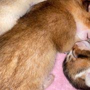 wir haben Kitten bekommen