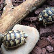 Suche 2 Landschildkröten