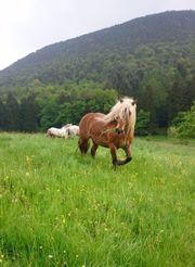 Pferd such Reitbeteidigung