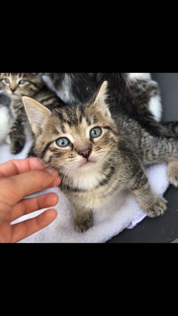 Baby Kater Katze Katzenbabys Kitten