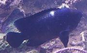 Gorgonien und Fische Beckenauflösung