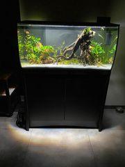 Aquarium Fluval Flex neuwertig mit