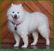 Puppy Love 15 Jahre - reinrassiger