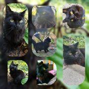 Katze Morle 3 Jahre sucht