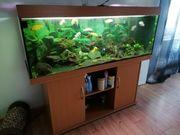 Aquarium 200 l von Juwel