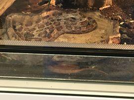 Terrarium mit 2 Schlangen: Kleinanzeigen aus Poing - Rubrik Reptilien, Terraristik