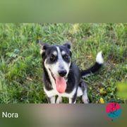 Nora - Verspielte und aktive Husky-Mix-Hündin
