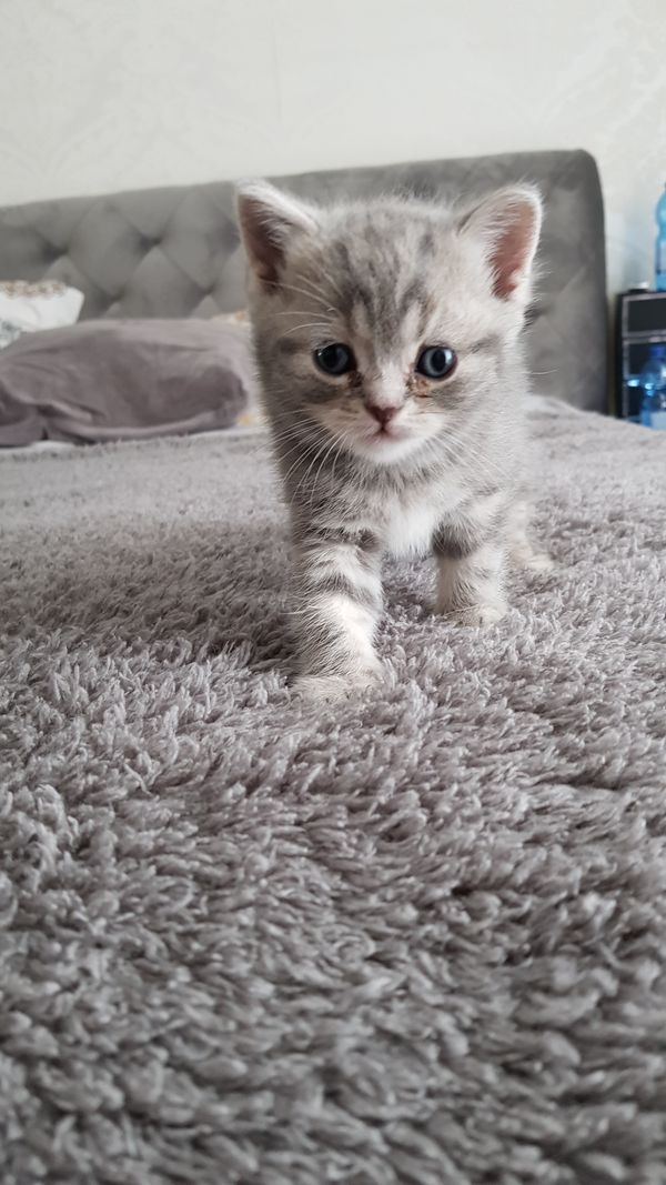 Babykatzen