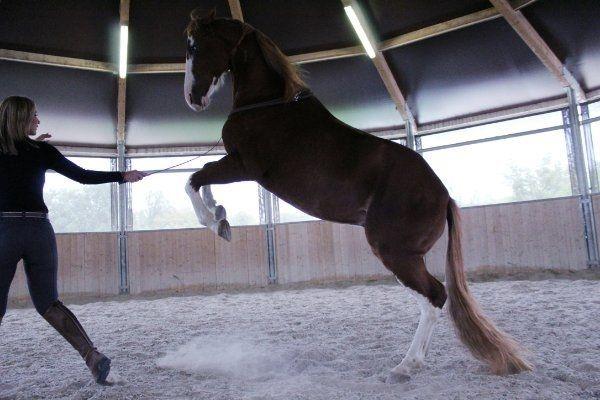 Horse-Positive Mobiles Jung Problem Freizeit