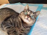 trotz Krankheit fröhliche Katze Chanel