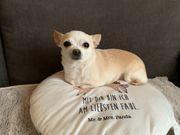 Suche Mini Chihuahua Deckrüde