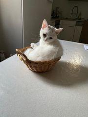 Katzchen