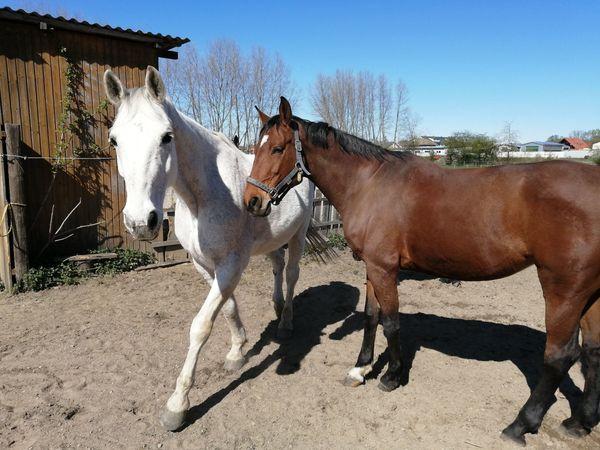 Unterricht Umgang mit Pferd für