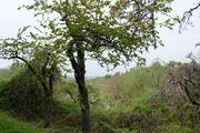 Gartengrundstück mit Obstbäumen Wochenendnutzung