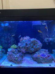 meerwasser Aquarium Red Sea 130D