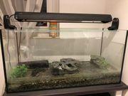 Aquarium mit Zubehör zu verkaufen