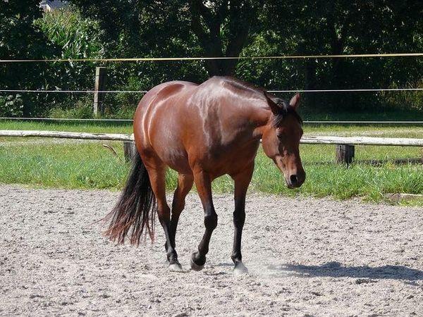 Pferd sucht Reiter Reitbeteiligung zu