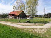 Pferdestellplatz Bewegungs- Offenstall