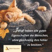 Katzenbetreuung Katzensitting