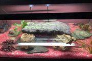 Zwei Wasserschildkröten mit Aquarium und