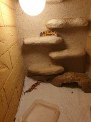 Wir geben 2 junge Leopardgeckos