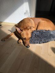 Hundebetreuung Tagesbetreuung